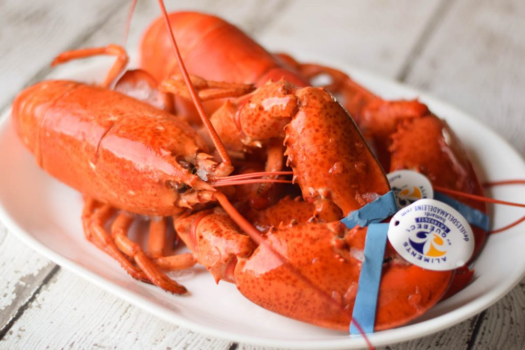 two whole lobsters on a white plate