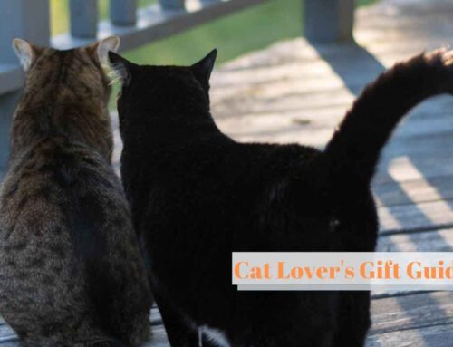 Gifts for Cat Lovers – Grumpy's Top 10 Gift Guide